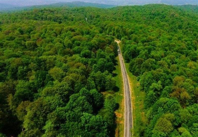 ثبت جهانی جنگل های ایران چه ارزشی دارد؟